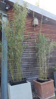 Bambus Garten In Heidelberg Pflanzen Garten Günstige Angebote