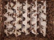 Futtertiere Futterinsekten Abgabeliste Arachno-World