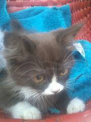 Hübsche Kätzchen