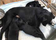 JETTE Liebevolle Hundemama sucht Zuhause