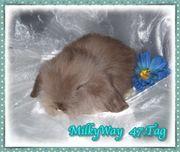 Kuschelige Teddywidder Baby