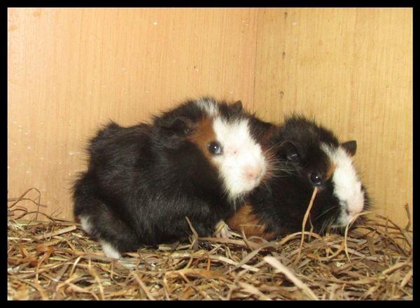 2 süße Bruder » Kleintiere