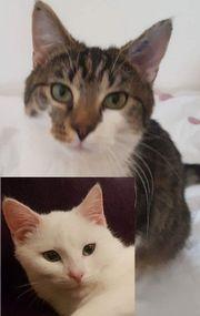 Tommy & Olli -Pflegestelle