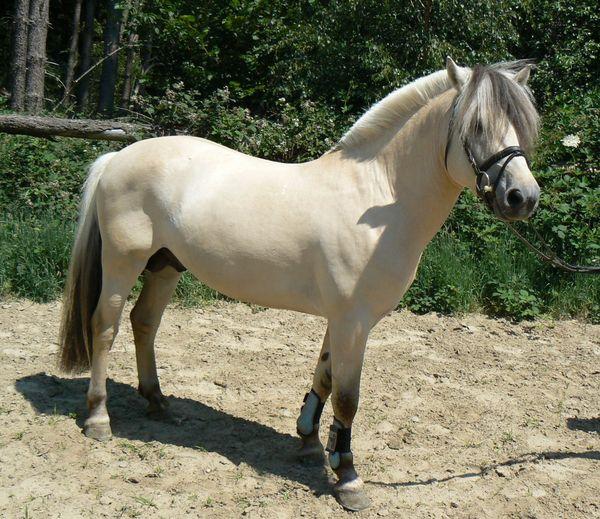 reitbeteiligungen pferde in hagen westfalen bei deinetierwelt. Black Bedroom Furniture Sets. Home Design Ideas
