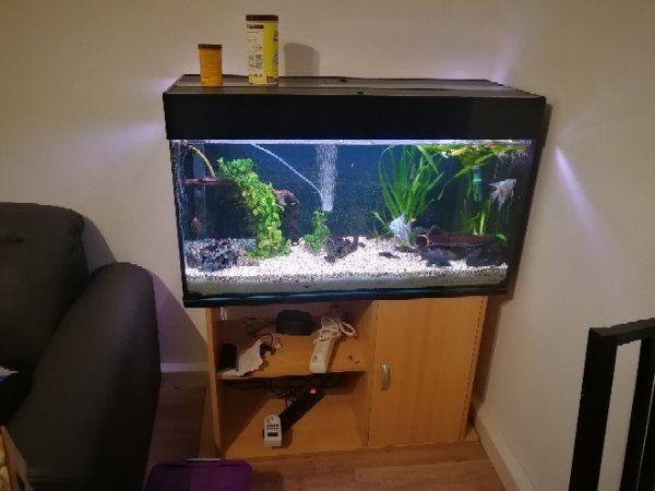 220 Liter Aquarium Mit Unterschrank In Furth Fische Aquaristik