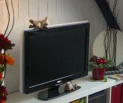 Philips LCD-TV Ambilight