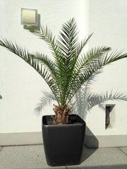 Verkaufen Palme