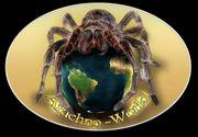 Vogelspinnen Wibellosen Abgabeliste Arachno-World