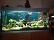 Raumteiler aquarium 150cm
