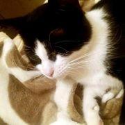 Süße Katze Mimi sucht ihre