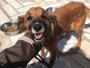 Gila, hübsche Hundedame