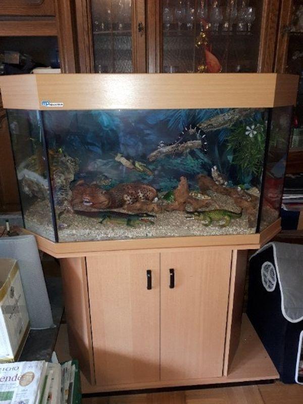 messer kleinanzeigen aquaristik kaufen verkaufen bei. Black Bedroom Furniture Sets. Home Design Ideas