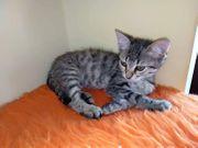 Kitten - Tierschutz - suchen ein Zuhause