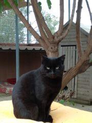 Katze Rosario sucht ein liebevolles
