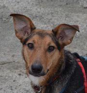 Pepina - sensible Hundeseele