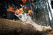 Baumfällungen - Bäume kappen -
