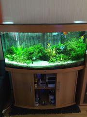 Aquarium Juwel 260 Vision guter
