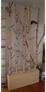 Weiße Birken Birkenstämme
