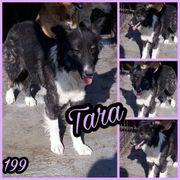 Schönheit Tara sucht Ihre Familie