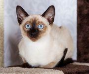 Kätzchen Katzenkind Kitten