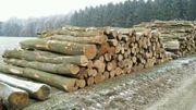 Buche Stammholz frisch