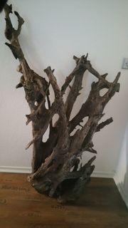 Sehr große Mangrovenwurzel