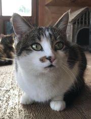 Wer hat unsere Katze gesehen