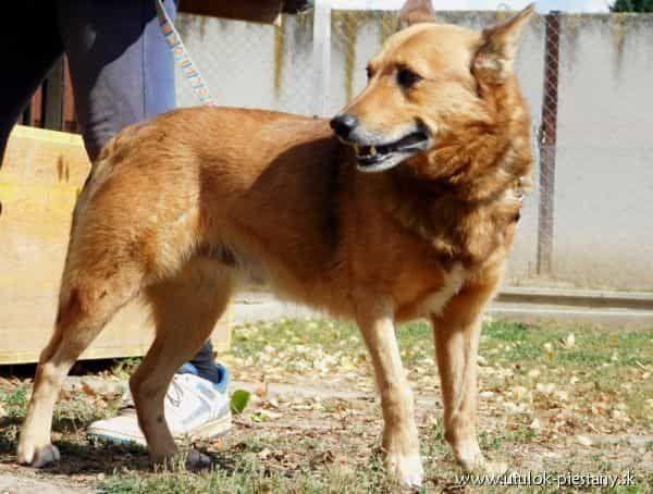 SCOTT lieber Hundesenior menschenbezogen verschmust