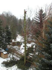Baumfällung Baumabtragen Stubbenfräsen Häckseln