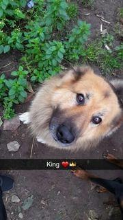 King such ein