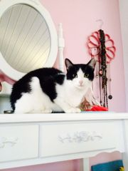 Katze Aranka- kastriert,