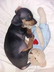 2 süße Hundewelpen