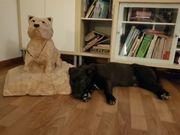 Traumhund sucht Traumzuhause