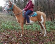 American Paint-Horse