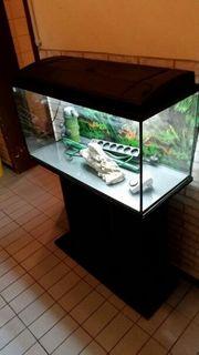 Verkaufe 112 Liter Aquarium mit