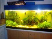 Großes Aquarium 300L