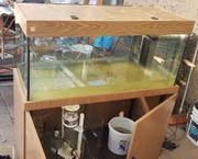 300liter Meerwasseraquarium