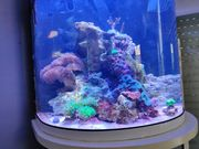 Meerwasser Aquarium 60 Liter Halbmond
