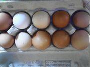 Eier von freilaufenden