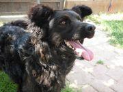 Pamacs - liebenswerter Familienhund