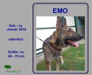 EMO - freundlich zugänglich aktiv Seine