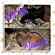 2 weibliche Kaninchen