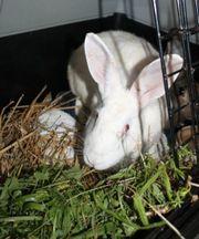 Kaninchendame in weiß