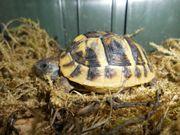Gr Landschildkröten Europ Sumpfschildkröte Bücher