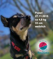 Puppi - Minipüppchen sucht Minikörbchen