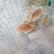 2 wunderschöne Hasenbabys(