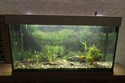 Aquarium 1 Meter
