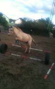 Biete rb an tollem Pony