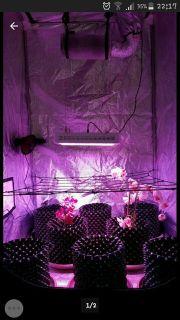 Growset 600w LED