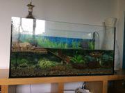 Aquarium für Wasserschildkröte